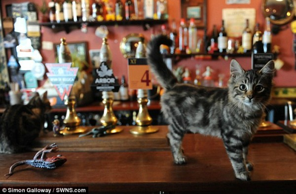 pub cats