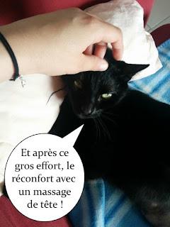 Grattouille sur la tête d'un chat noir.