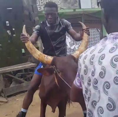 Comedian Akpororo riding his cow to Warri,Akpororo on a cow,Akpororo rides a cow,Akpororo and cow 10