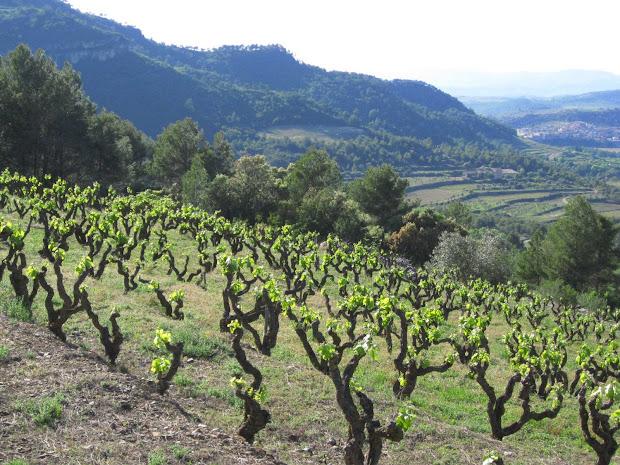 tokaj wine region historic cultural