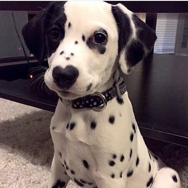 Cute dogs - part 94, funny dog pictures, best dog photos, adorable dogs