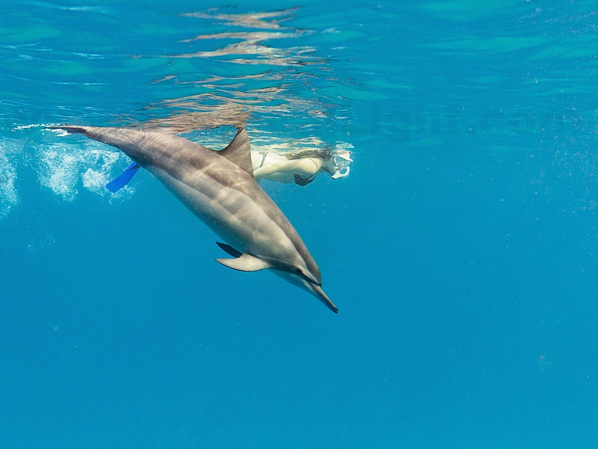 http://www.tropicallight.com/water/dolphins/02jan15dolphins/02jan15dolphins.html