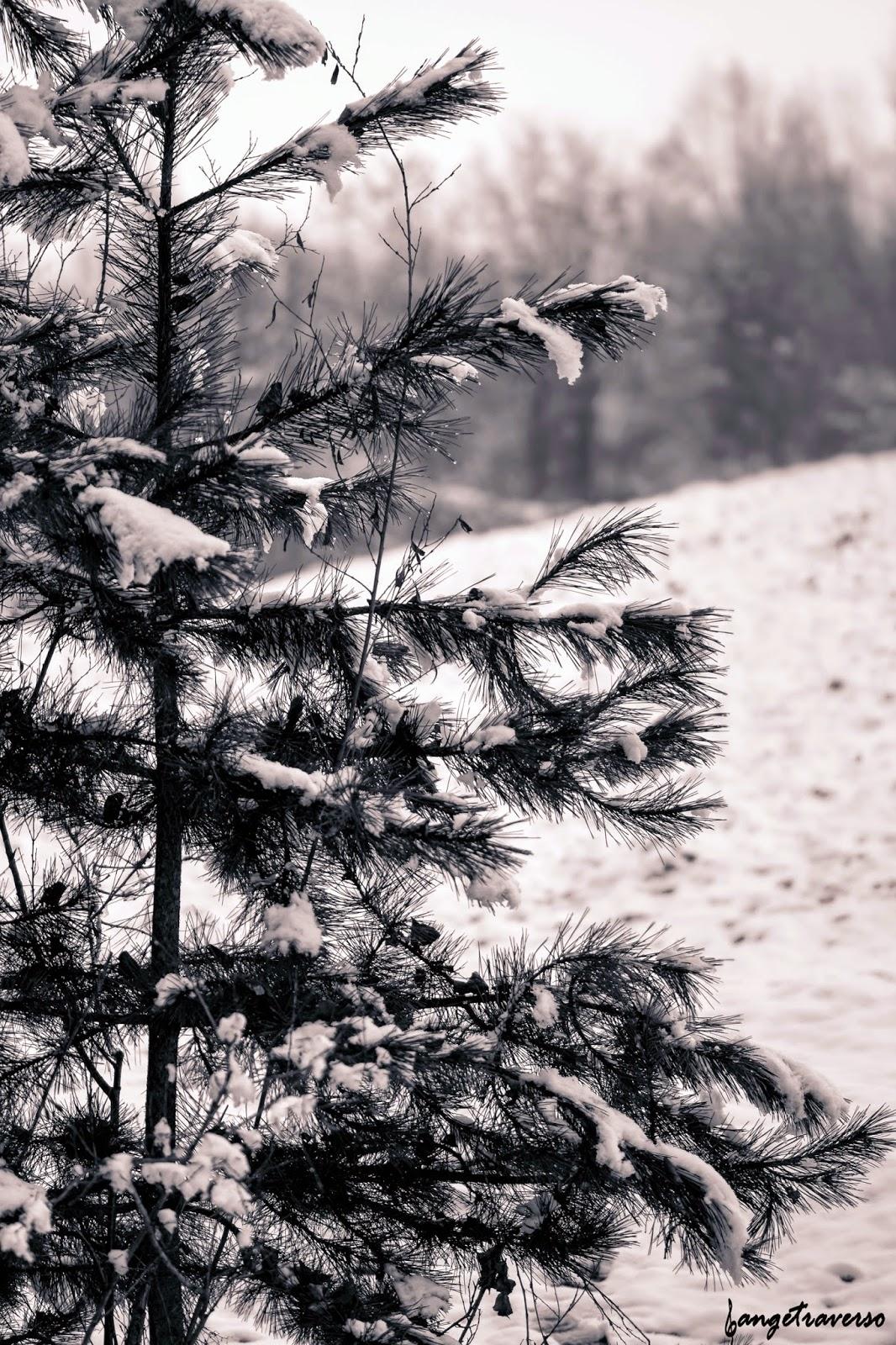 Hiver et neige abondante en Haute-Savoie, en février 2015