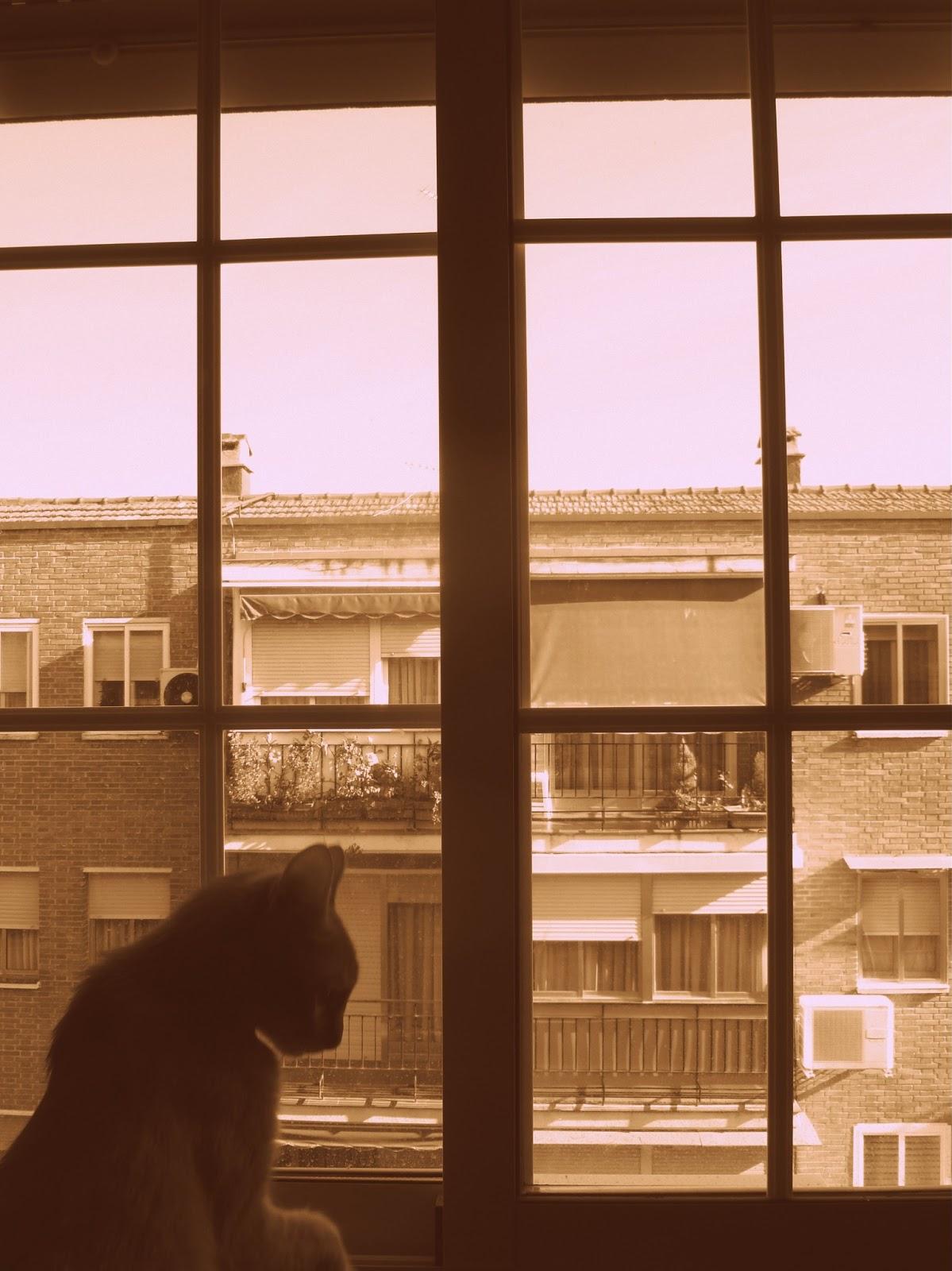 Gatito Jerome en la ventana