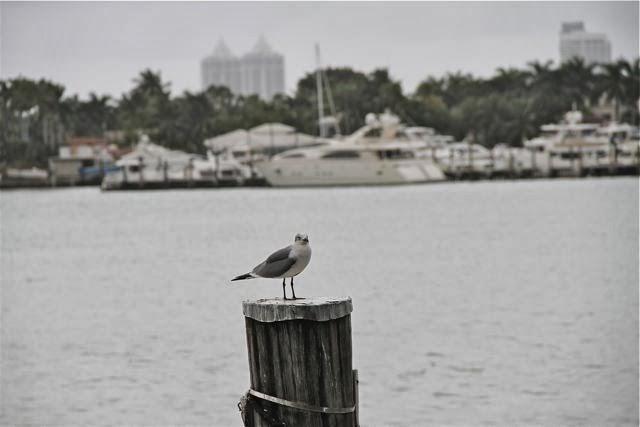 Gaviota en Miami- Blog Esteban Capdevila