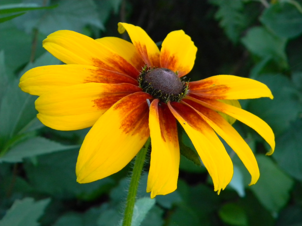 Bees, Birds, Berries, and Blooms!: Summer time flowers...
