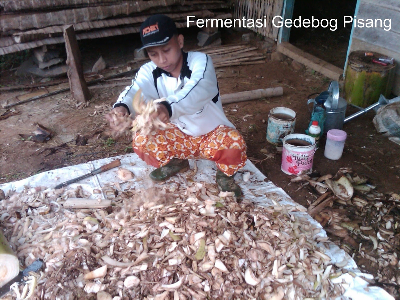 Hcs Success Fermentasi Jerami Dan Gedebok Pisang Pola
