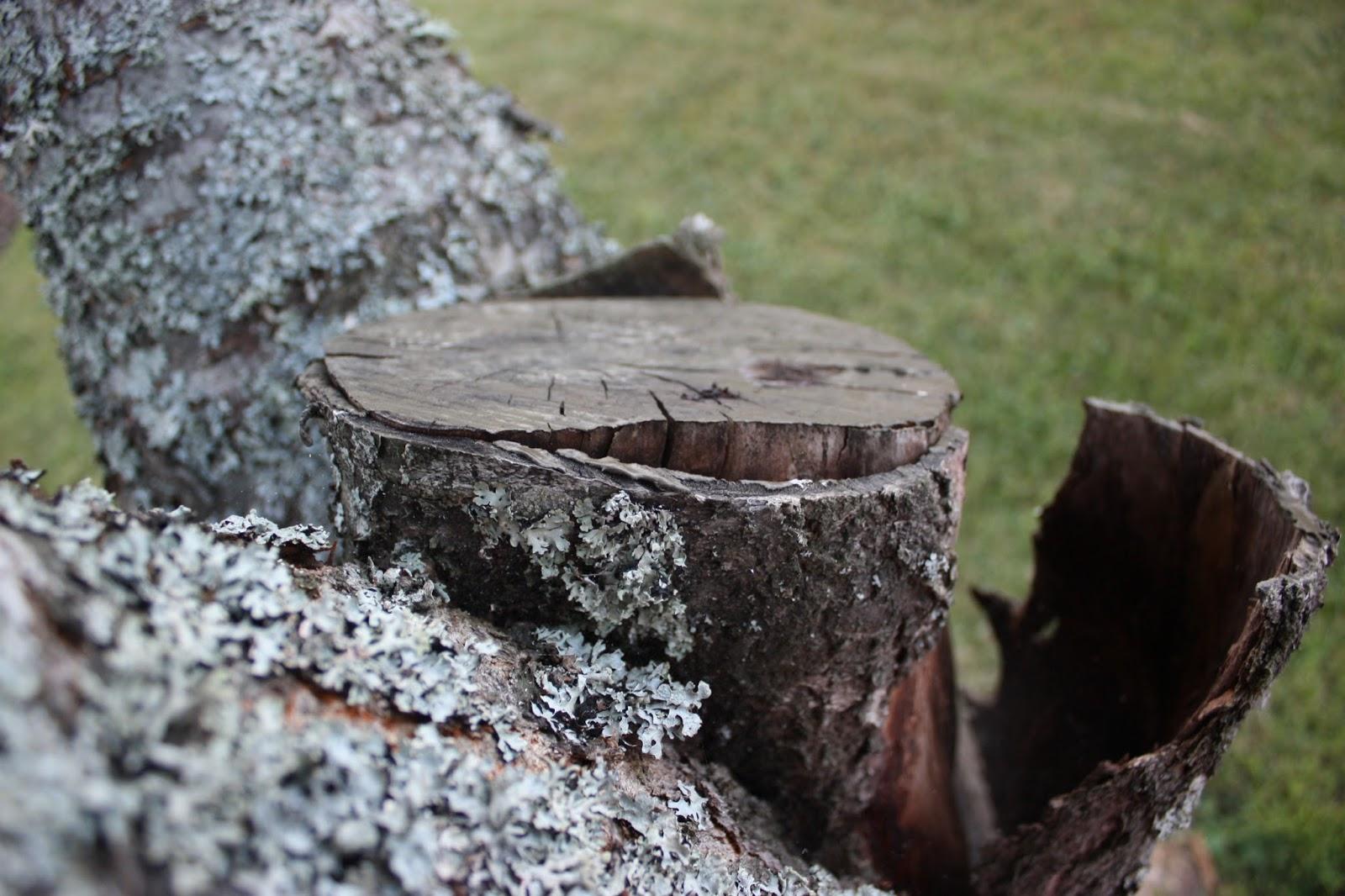 Josefins trädgård: träd gården ii (iii)