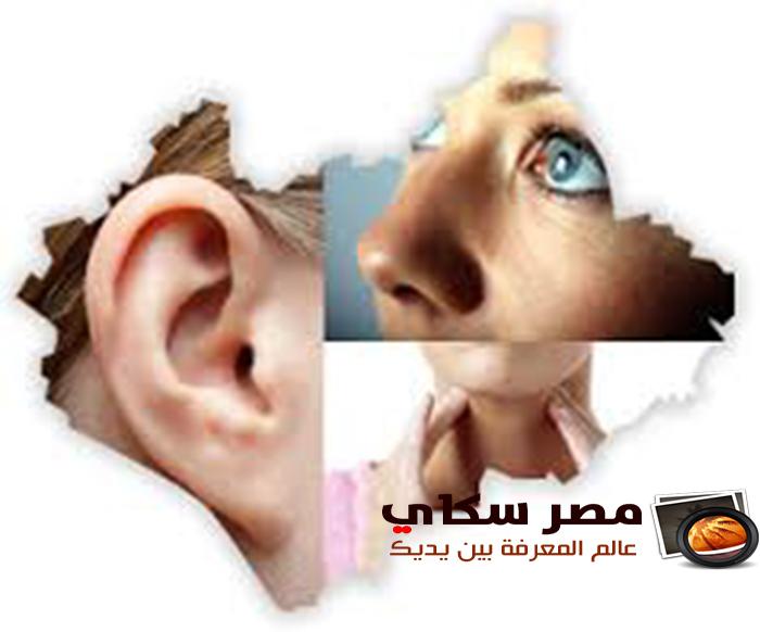 الأذن والأنف وكيفية العناية بهما