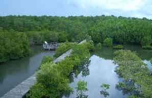 mangrove_hutan