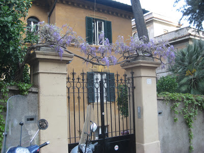 Wisteria across a private gate in Rome