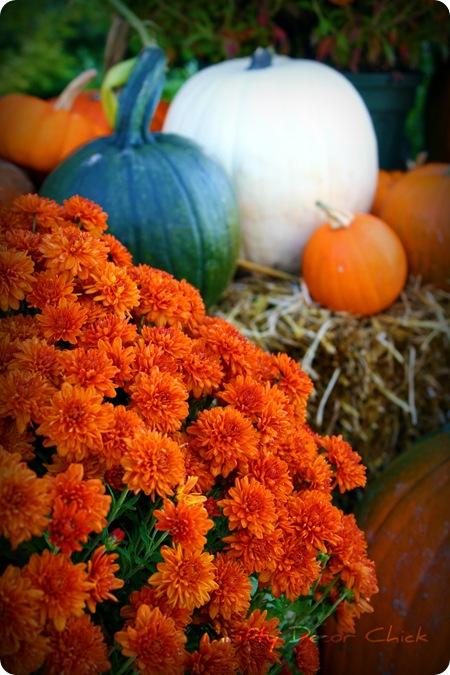 Fall Backyard Party Ideas : Autumn Outside Party Ideas1