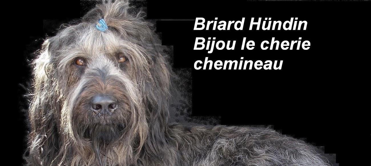 Briard Bijou le cherie chemineau