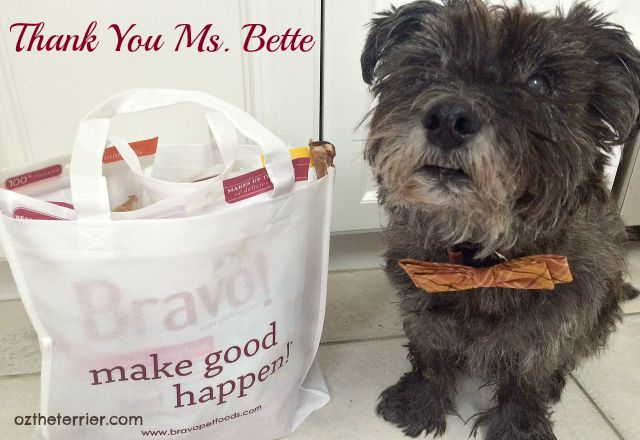 Oz the Terrier with his Bravo Pet Foods gift bag