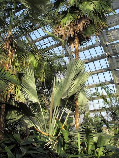 Palm Room at Garfield Park Conservatory