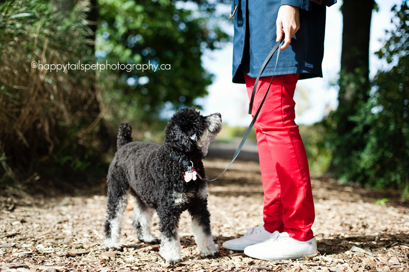 Small dog looks up to his owner on a Burlington trail.