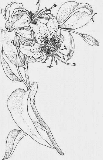 Lilies tattoo stencil