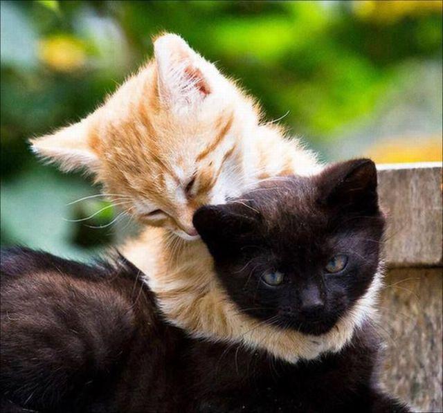 Imagenes chistosas de facebook, fotos tomadas en el  - fotos divertidas de animales