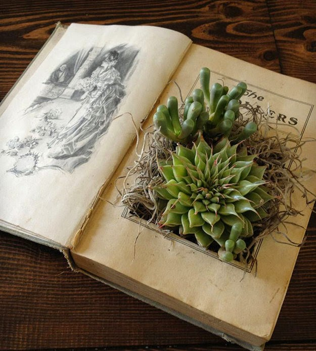 planteur plante cool