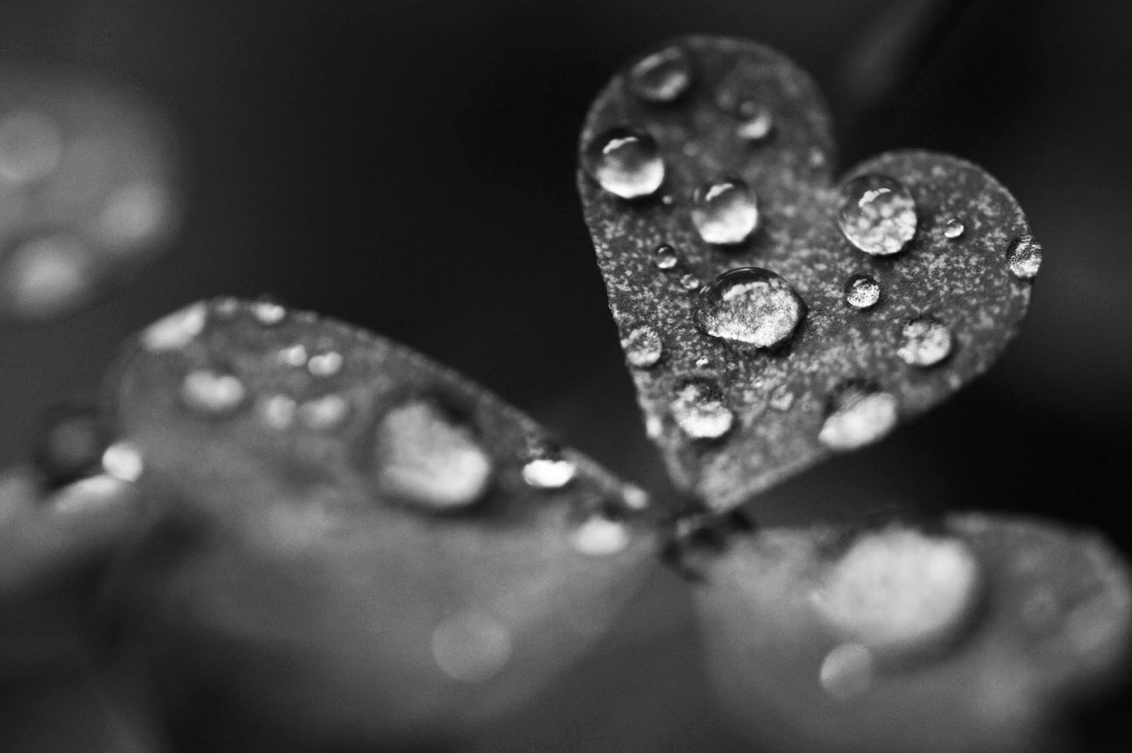 Simple Wallpaper Love Rain - rain+love+(8)  Gallery_511006.jpg