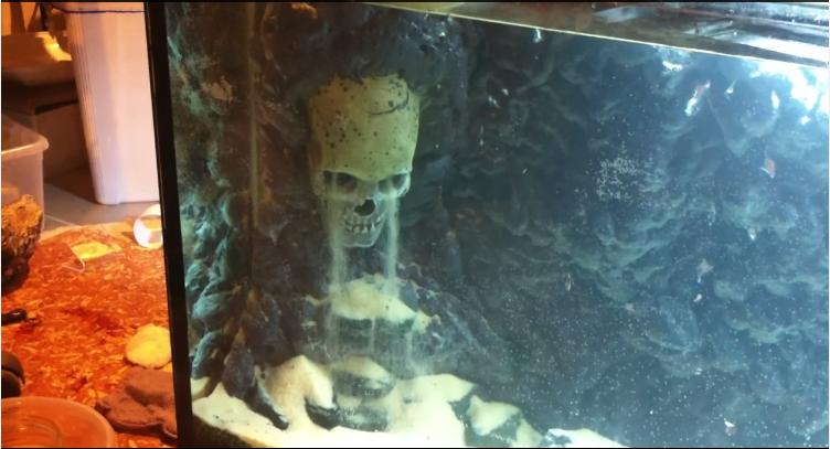 Hồ thủy sinh suối thác đầu sọ