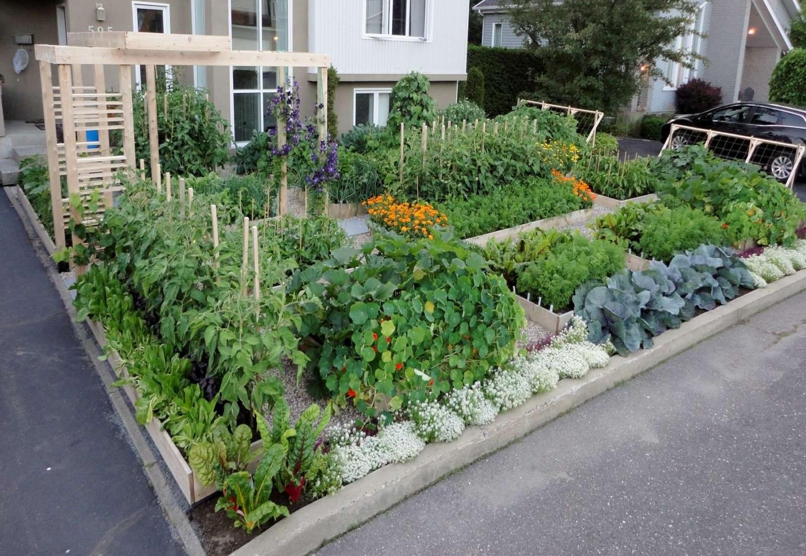 Kitchen Gardeners International A Repressalbo Contra O Anticonsumismo Homem Ac Multado Por Fazer