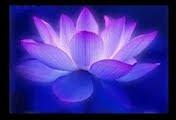 Flores Fundo Escuro-Papel de Parede