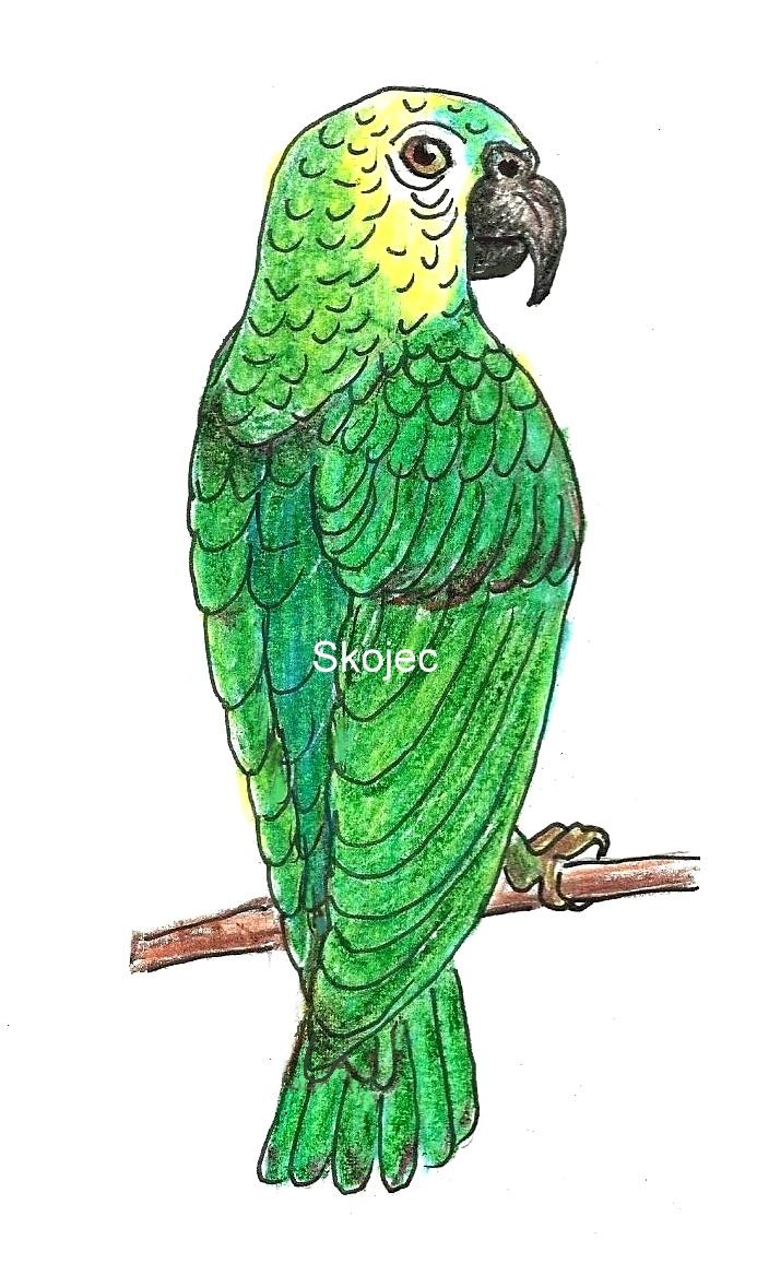 parrots art class ideas