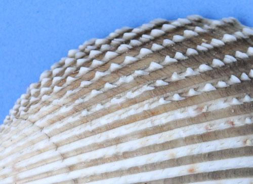 shell macro