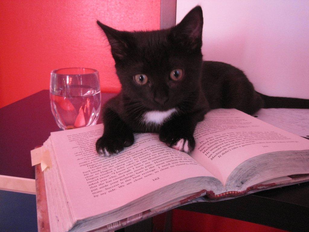 Черный котенок лежит на книге