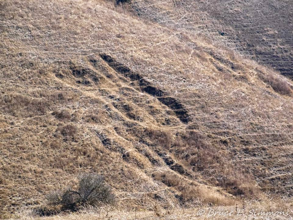 GODZILLA appearing Foot print in the Bay Area, photo by B. Simmons