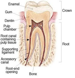 Endodontic Procedures