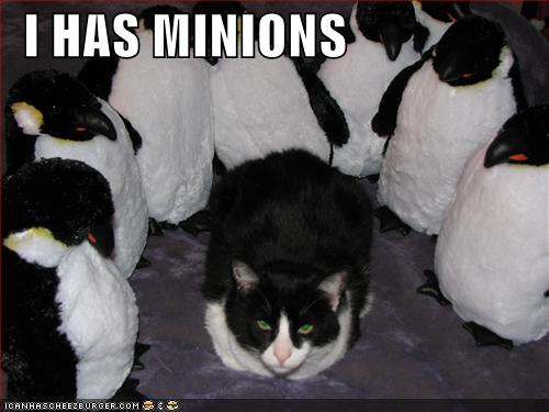 black and white cat surrounded by emperor penguins has minions