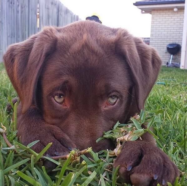 Amazing puppy dog eyes