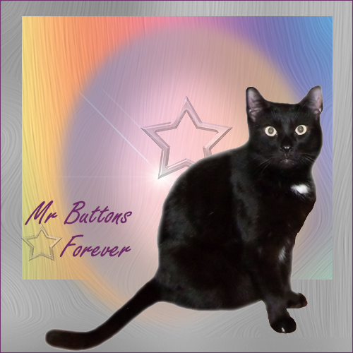 Mr. Buttons - Heaven gains a new Angel