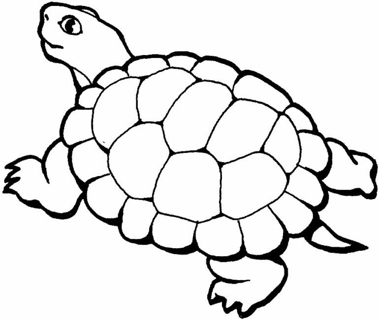 Turtle Coloring Pages 1080p
