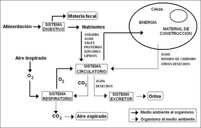integración de los sistemas en la nutrición