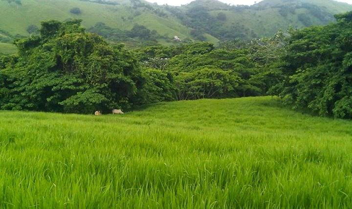 Portal ganadero higueyano que variedad de pasto cultivar for Factores para seleccionar el terreno para el vivero