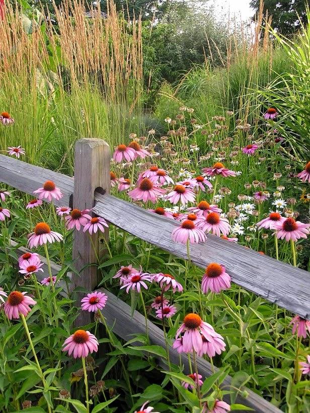 Backyard Flower Farmer : FLOWER GARDEN, INSPIRATION THURSDAY