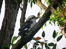 La Coocaburra