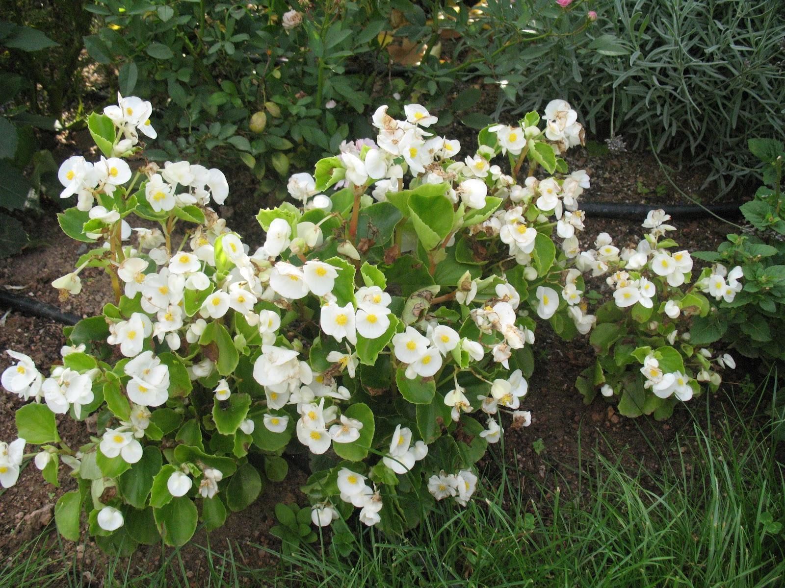 Massif de fleurs zen for Jardin de fleurs blanches