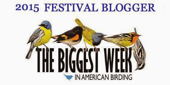 Join me at the Biggest Week in American Birding