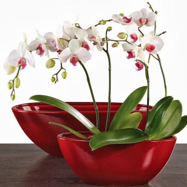 Il mondo in un giardino preziosa e delicata l 39 orchidea for Vaso orchidea