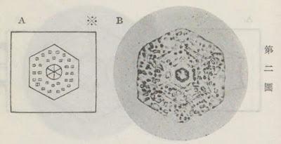 『雪華図説』の研究 模写図と顕微鏡写真と比較 第二図