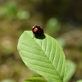 Als iemand echt van de natuur houdt, vindt men overal schoonheid. Vincent van Gogh