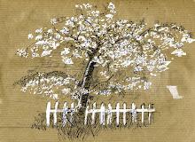Apple tree. Mevagissey