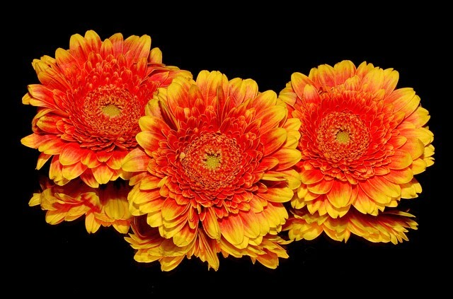corinaselberg - Orange - http://pixabay.com/fr/orange-fleur-automne-201761/?oq=fleurs