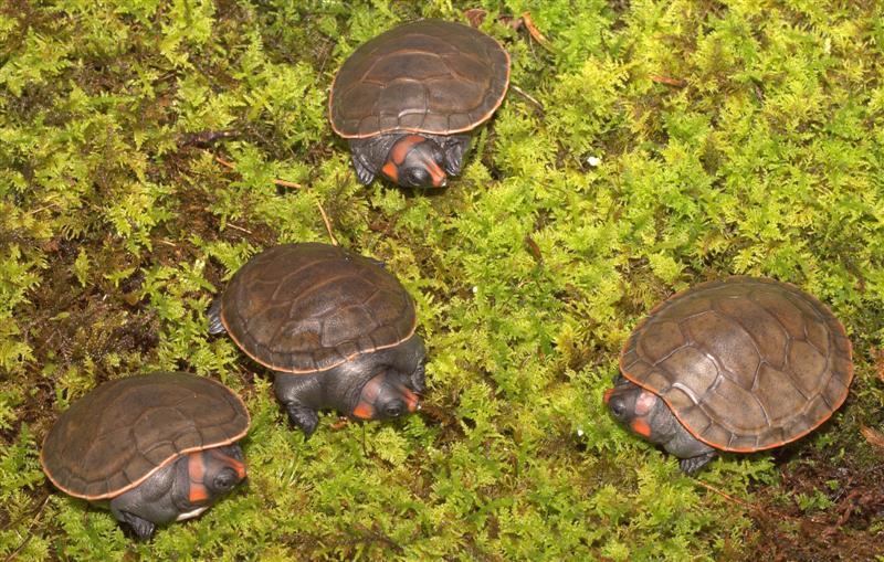 Tennessee Aquarium Blog: Baby Turtle Mania at the Tennessee Aquarium