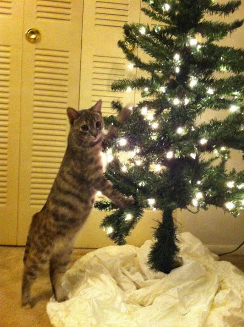 Kreatif - Pokok Krismas Anti-Kucing