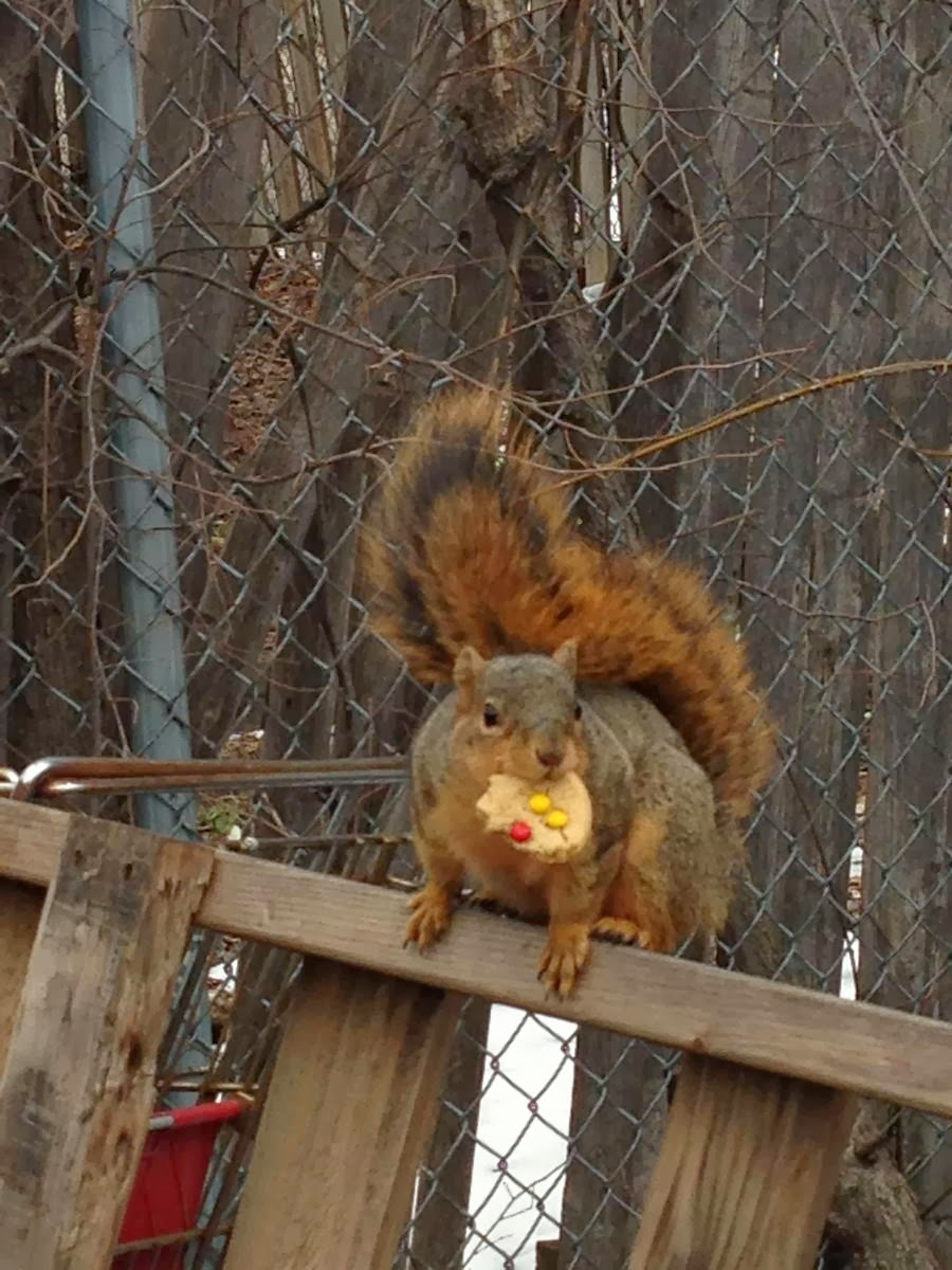 Funny animals of the week - 7 February 2014 (40 pics), squirrel gets a cookie from trash bin